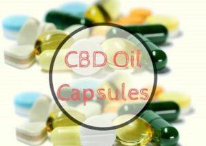 CBD Oil Capsule