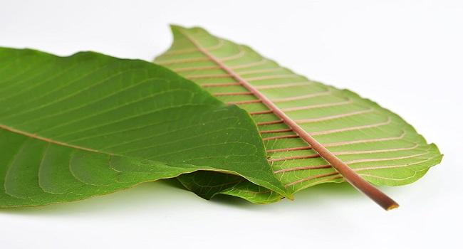Red-Vein-Kratom-Strains