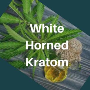 White Horned Kratom