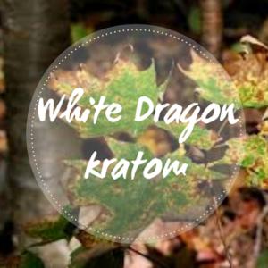 white dragon kratom overview