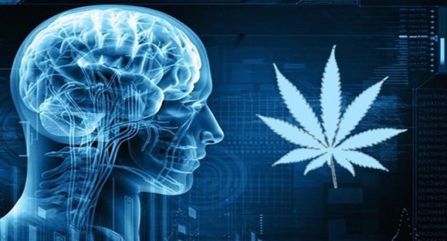 CBD-and-your-system