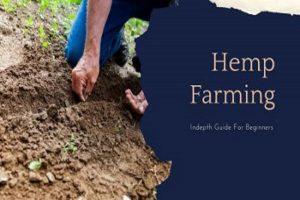 Hemp Farming