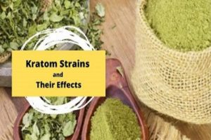 Kratom Strains And Their Effects