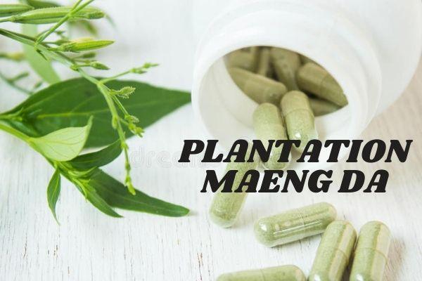Maeng Da